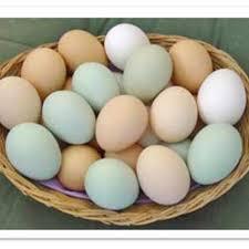 Ovos caipira - Meia Duzia (não orgânico)-0